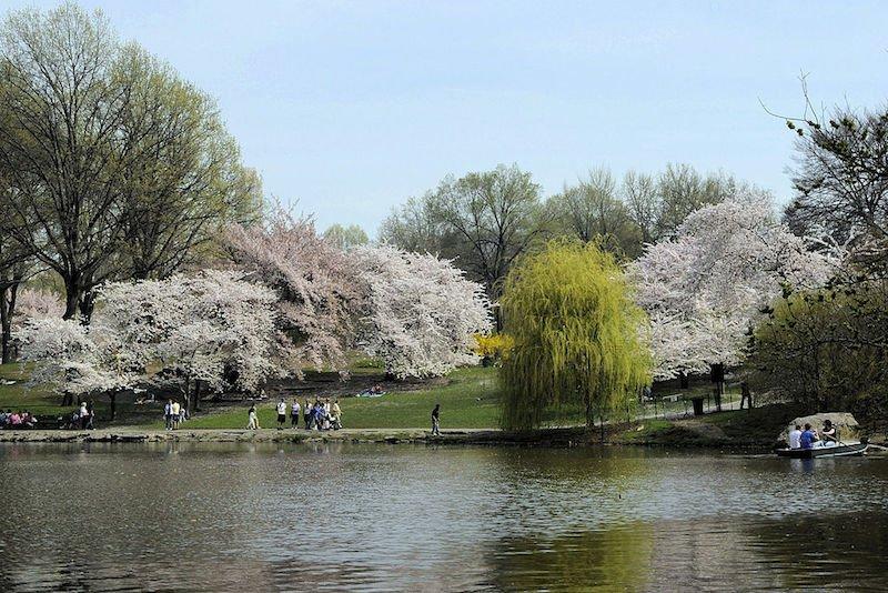 printemps-new-york