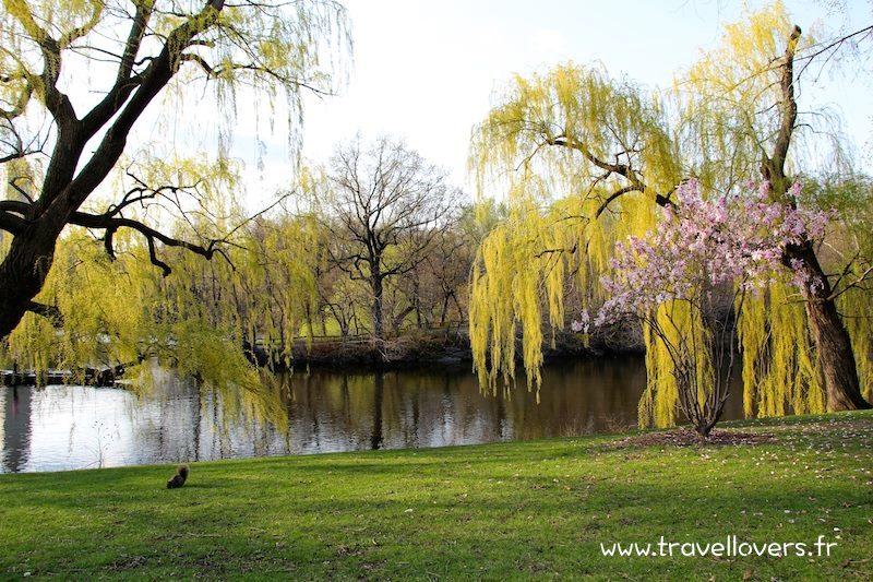 central-park-ecureuil