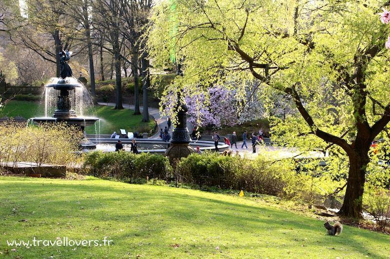 ecureuil-central-park