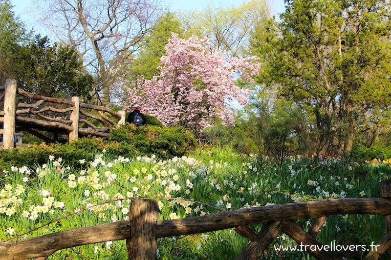 fleurs-printemps-central-park