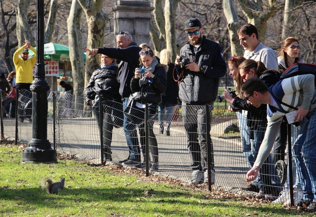 photographes-ecureuil-central-park