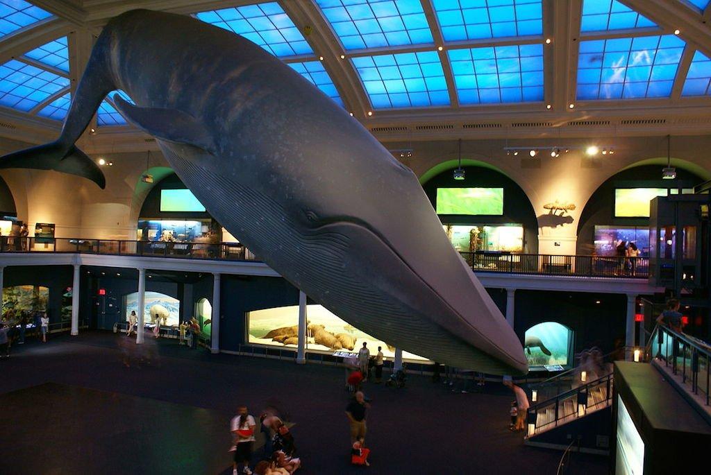 baleine-musee-histoire-naturelle-new-york